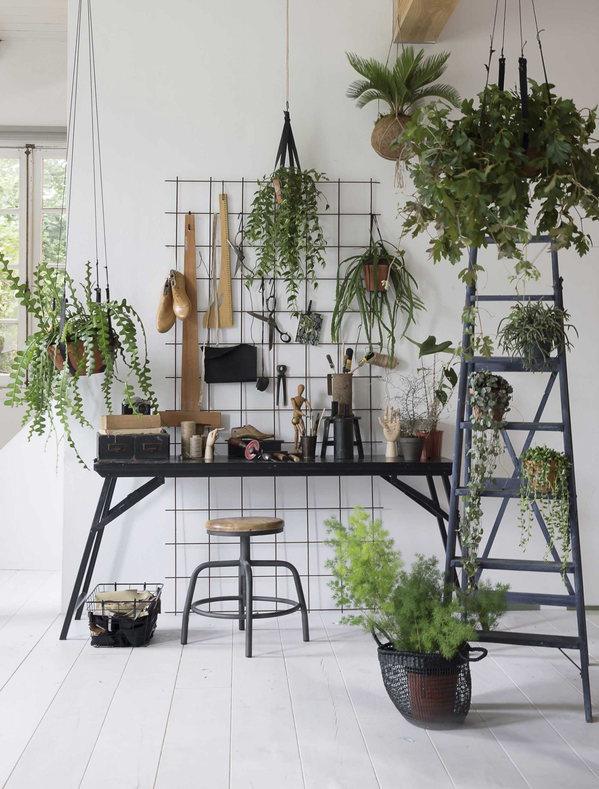Grote Groene Planten In Je Interieur 100 Woongeluk