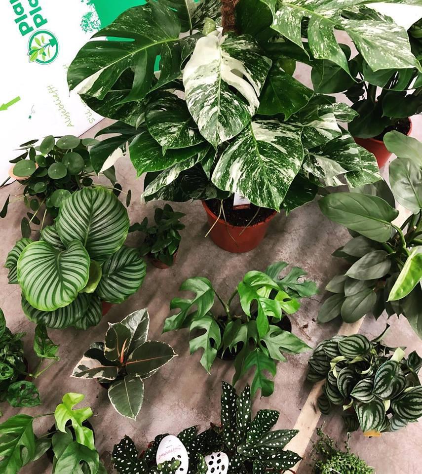 Monstera-plant-groen-wonen-botanisch-industrieel-interieur-planten-in-huis-interieur-stoere-plant-gatenplant-10