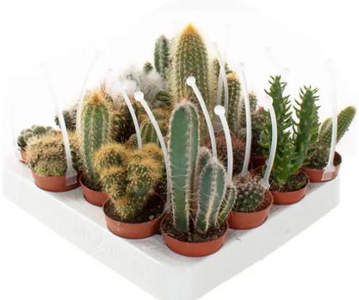 Cactus-interieur-groene-planten-groen-wonen-botanisch-interieur-natuur-interieur-decoratie-woonaccessoires