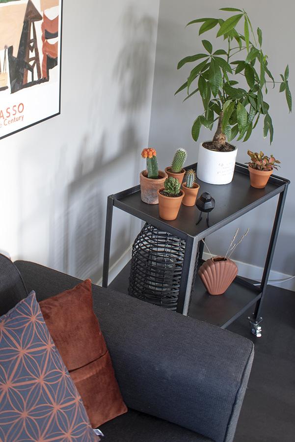Bijzondere kamerplant Geldboompje groen interieur planten in huis