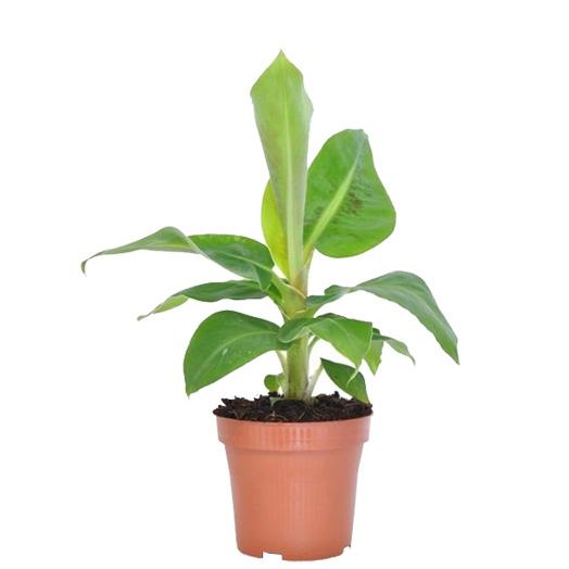 kamerplanten kleine kamerplanten binnenplanten hangplant binnen makkelijke kamerplanten groene kamerplanten groene planten hippe kamerplanten