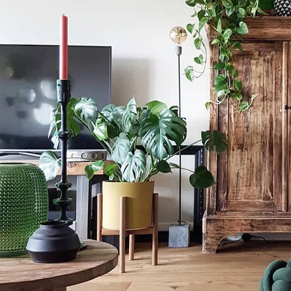 kamerplanten grote kamerplanten binnenplanten hangplant binnen makkelijke kamerplanten groene kamerplanten groene planten hippe kamerplanten