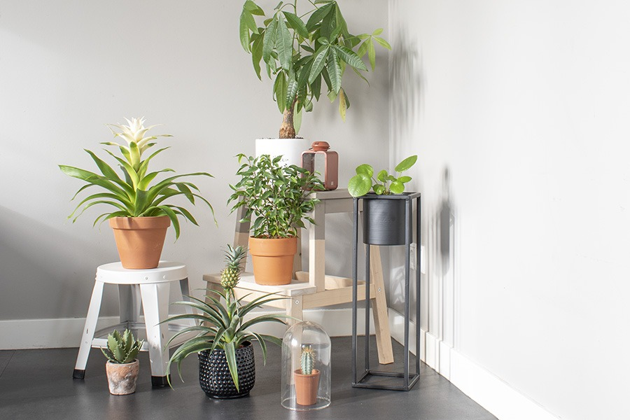 plantenhoekje plantenhoek planten in huis planten woonkamer hippe kamerplanten kleine kamerplanten veel planten in huis planten huiskamer