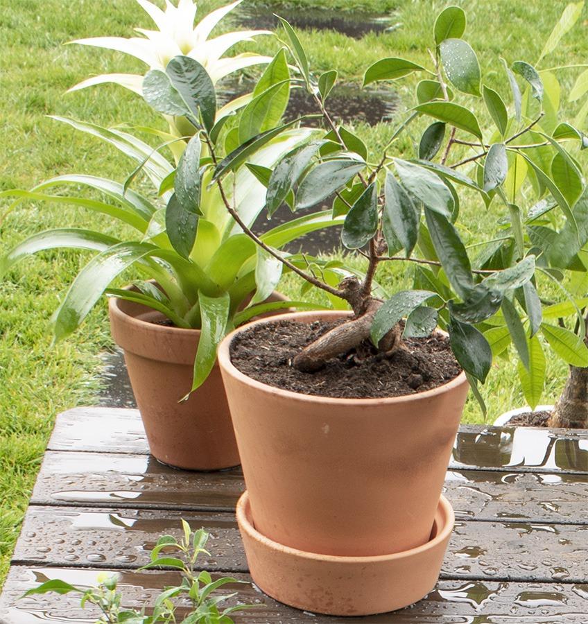 planten verzorgen planten water geven kamerplanten verzorgen wanneer planten water geven hoe vaak planten water geven kamerplanten in regen zetten kamerplanten naar buiten kamerplanten buiten zetten