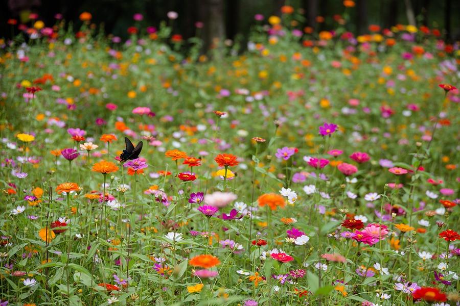 pluktuin voor beginners wilde bloementuin wilde bloemen pluktuin pluktuin bloemen oranje & gele wilde bloemen paarse & blauwe wilde bloemen witte wilde bloemen rode & roze wilde bloemen