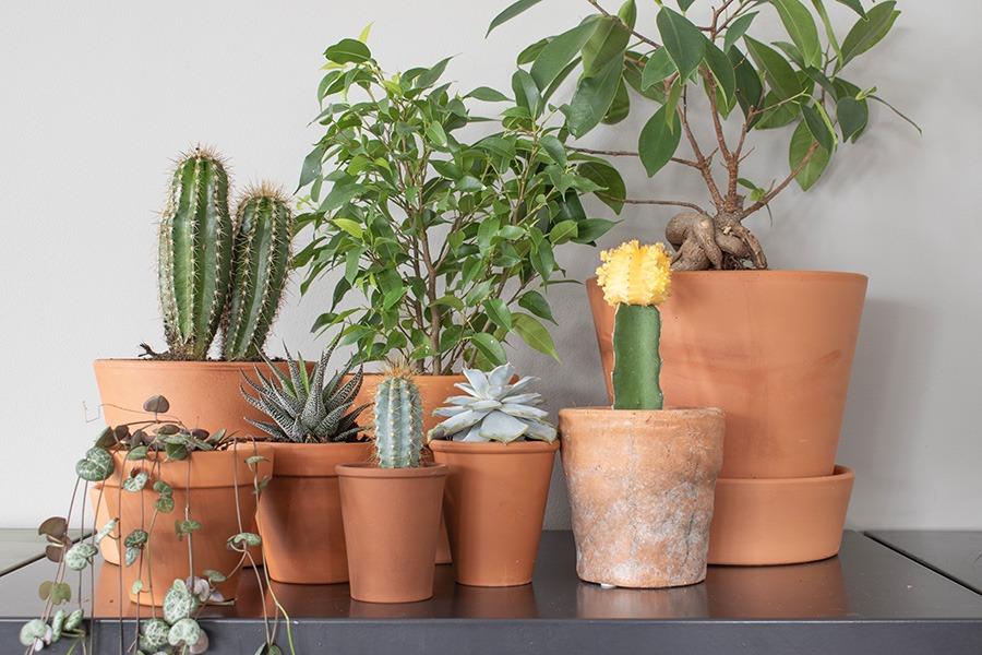 Terracotta-bloempotjes groen in huis terracotta combineren planten woonkamer grijze locker woonblog