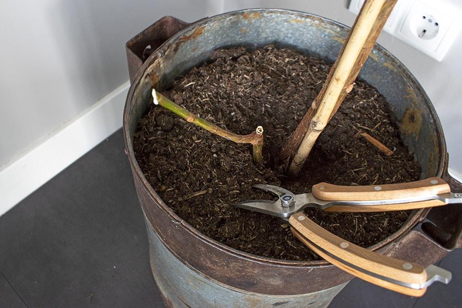 rubberplant stekjes rubberplant stekken plant stekken plantjes stekken stekken van planten stek je plant stekken planten welke planten makkelijk stekken