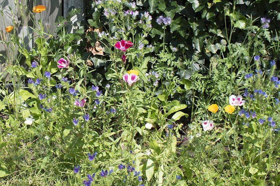 wilde bloemen zaaien wilde bloemen zaden bloemenweide zaaien veldbloemen zaaien wilde bloemen zaaien wanneer wilde bloemen zaaien gratis wanneer wilde bloemen zaaien wilde bloemenzaden bloemenzaad wilde bloemen zaaien en oogsten zelf zaden oogsten bloemen