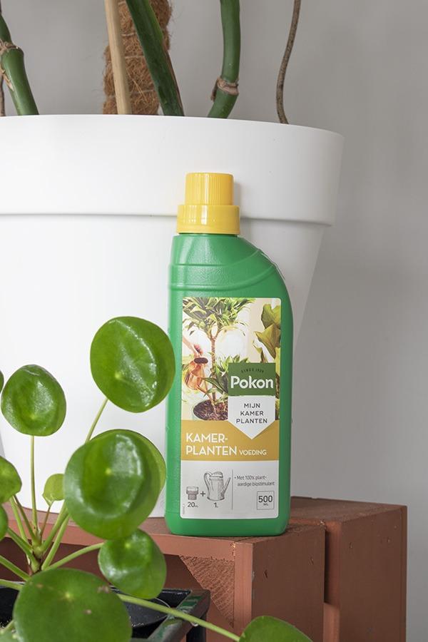 Plantenvoeding verzorging kamerplanten